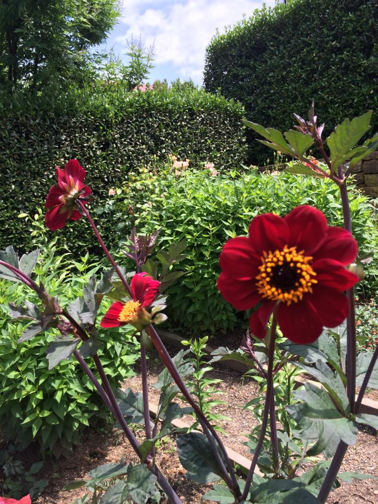 GardenOutsideHouse_PAllenSmith