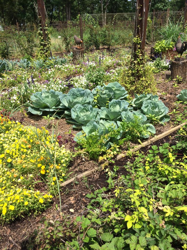 VeggieGarden_PAllenSmith